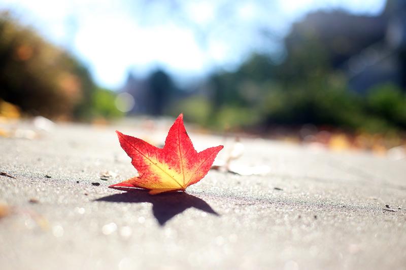 red_leaf_800