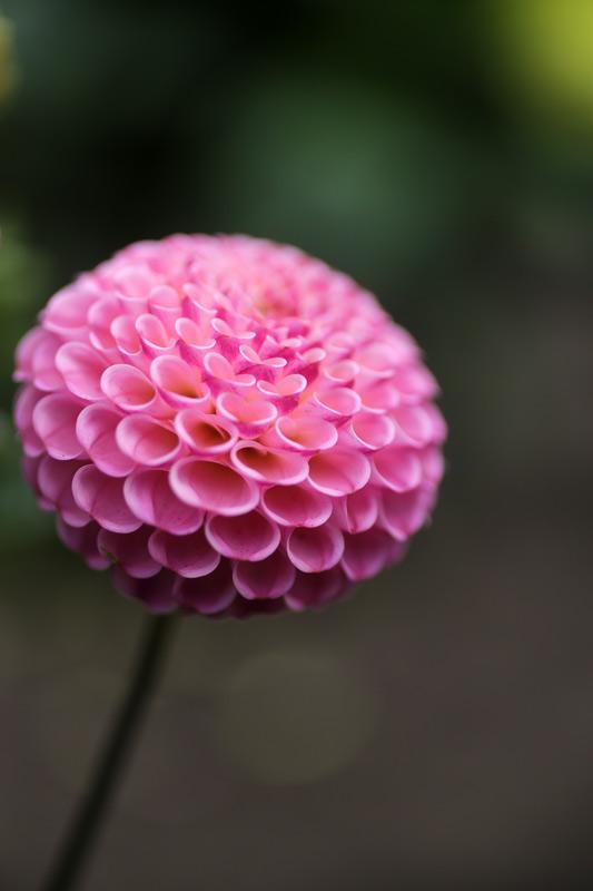 pink_ball_800