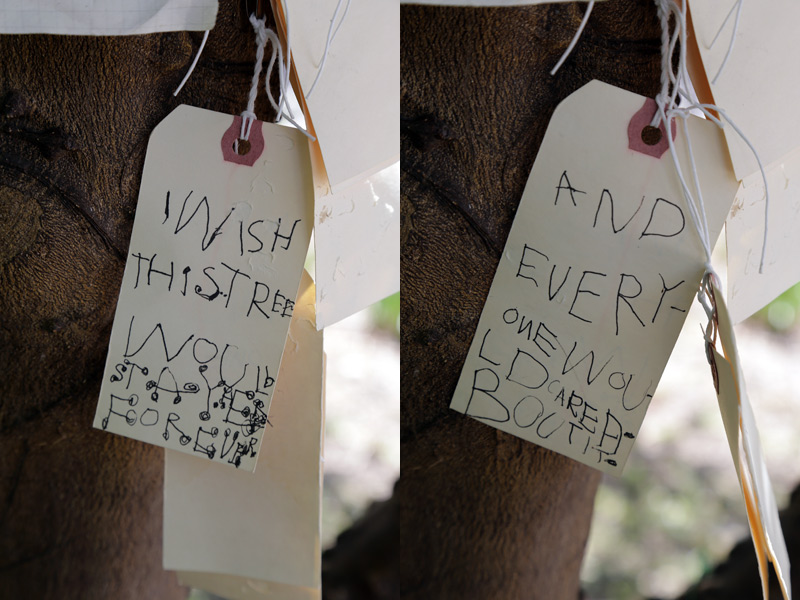 wish_tree_forever_care_800