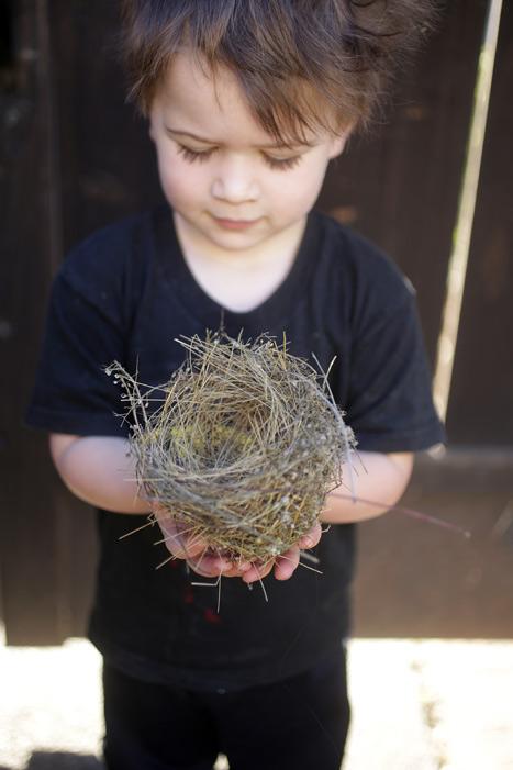 bird_nest_nico_700