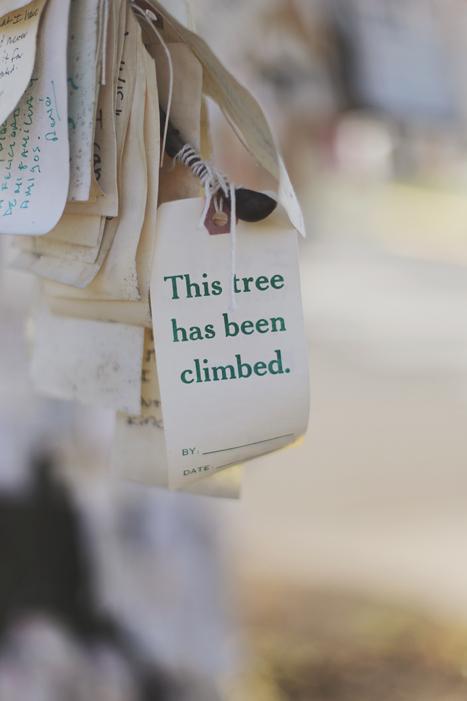 tree_climbed_700